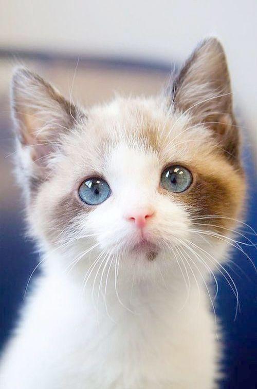 Sharing is caring! (с изображениями) Красивые кошки