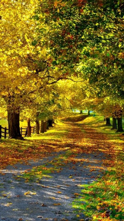 Country Living ~ country road, Fall