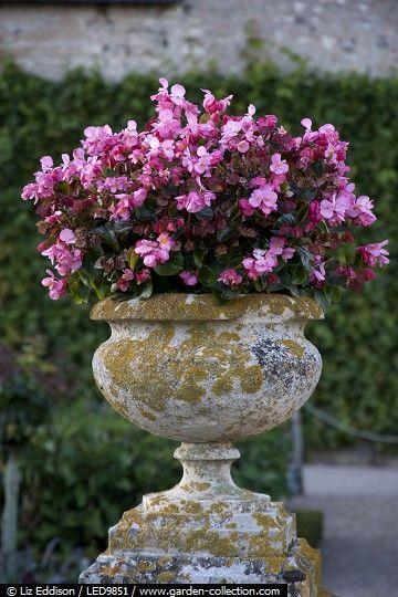 Weathered stone urn with Begonias - Villandry LED9...