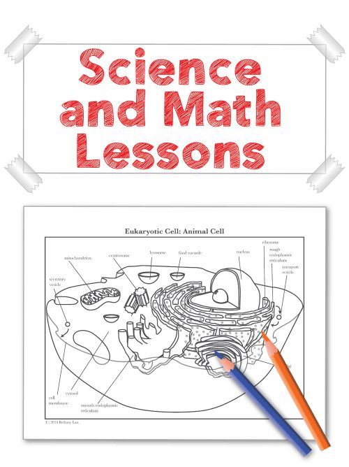 Home - Science and Math with Mrs. Lau