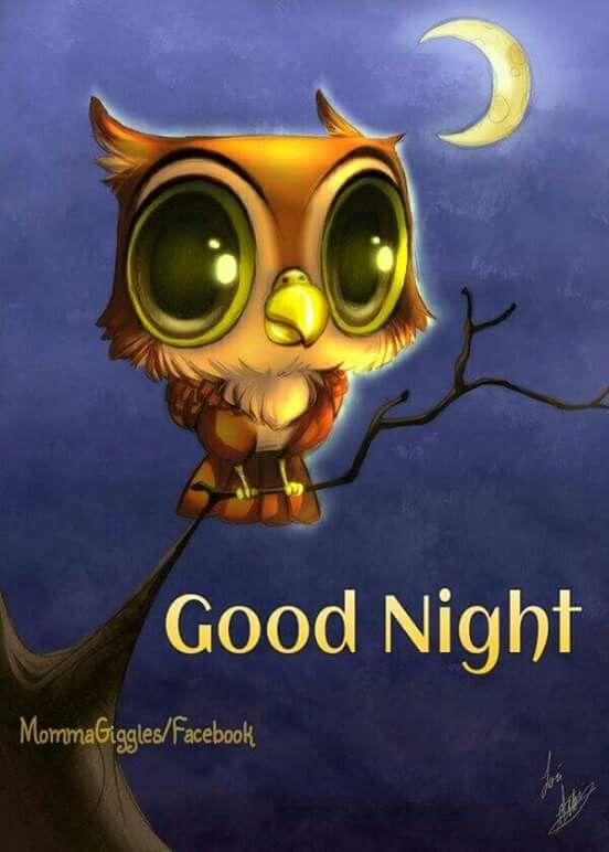 Bildergebnis für sweet dreams bird images