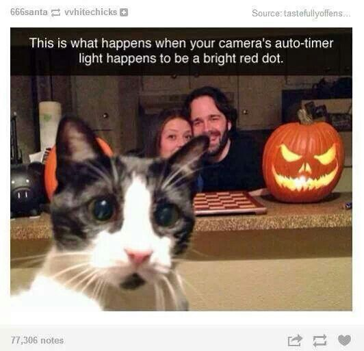 There went the camera. Cat finally caught the red dot.