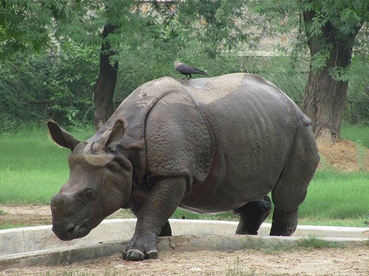 Animal Sanctuaries in Delhi, India @ Sanctuariesindia.com