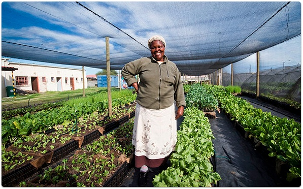 Project Spotlight: FoodPods - a Social Enterprise focused on micro agri-business opportunities for Food Security in South Africa   #socent #foodsecurity