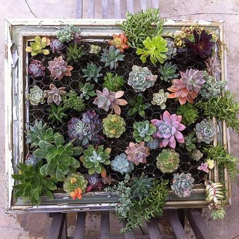 do it yourself, sukkulenten, bilderrahmen gestalten, wandgestaltung, gruene wand, luna-see.com