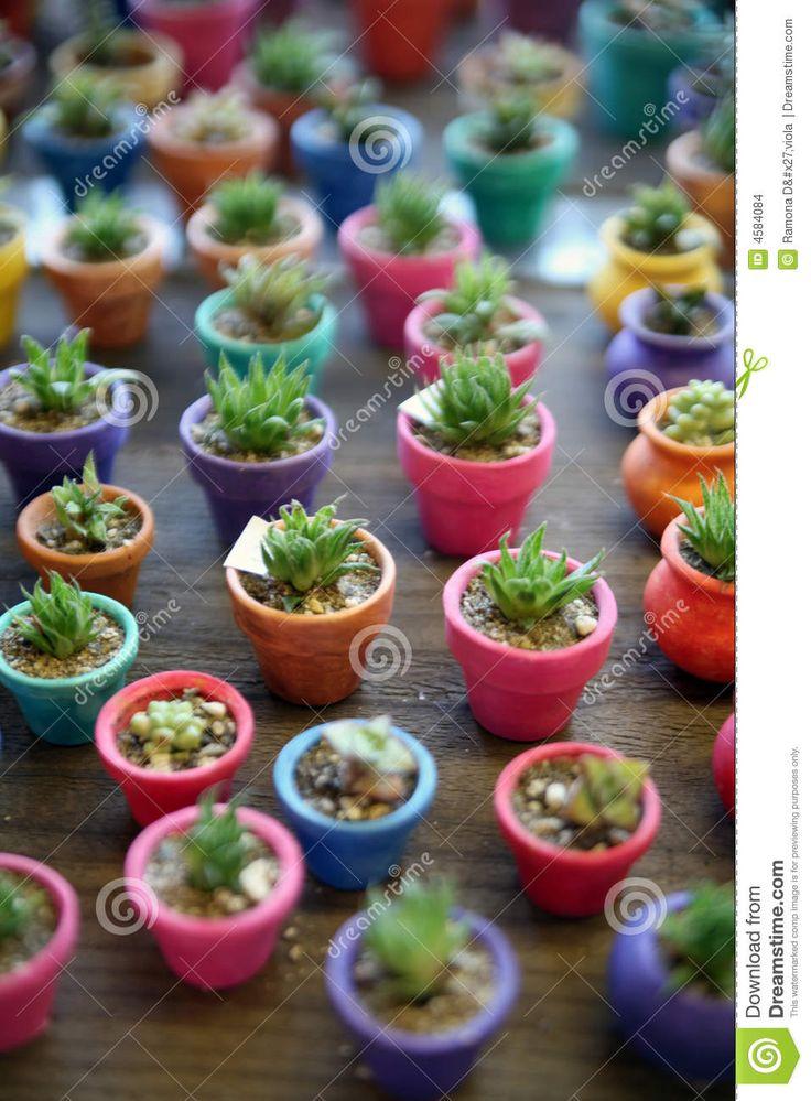 Cacto Miniatura En Plantadores Coloridos - Descarga De Over 65 Millones de fotos de alta calidad e imágenes Vectores. Inscríbete GRATIS hoy. Imagen: 4584084