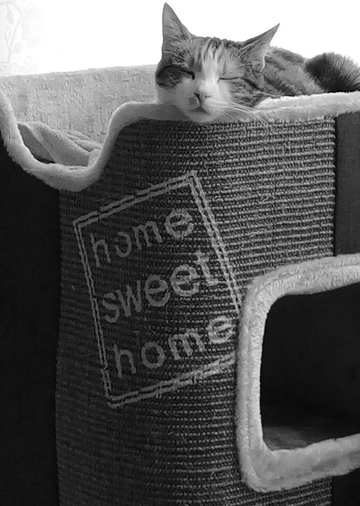 My #cat 😍