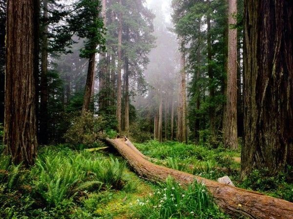 Символика деревьев в искусстве « Крупномеры, посадка крупномеров, посадка деревьев, пересадка деревьев, продажа деревьев