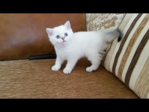 Super Cute and Playful Kitten Ever – Cutest Kittens in the World 2017 | ...