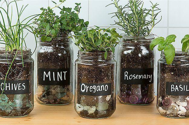 groß Machen Sie einen entzückenden Kräutergarten mit alten Gläsern