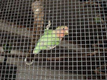 Pretty bird! #bird #green #animal #tweet #nature #aviary