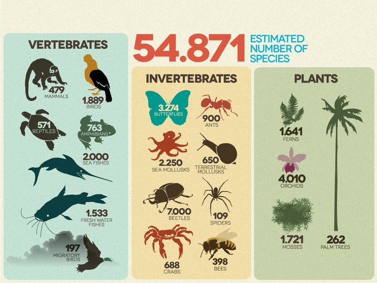 Estimated number of species in Colombia