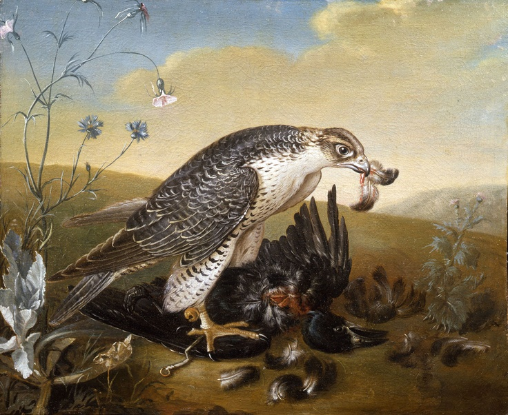 Falcon (not a Gos) pluming a Rook. Rafael Valls