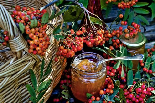 Rowan berries (and several recipes in finnish)