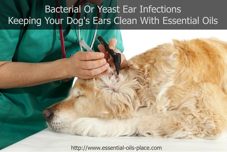 How To Cure Yeast Infection In Dogs Ears Naturally