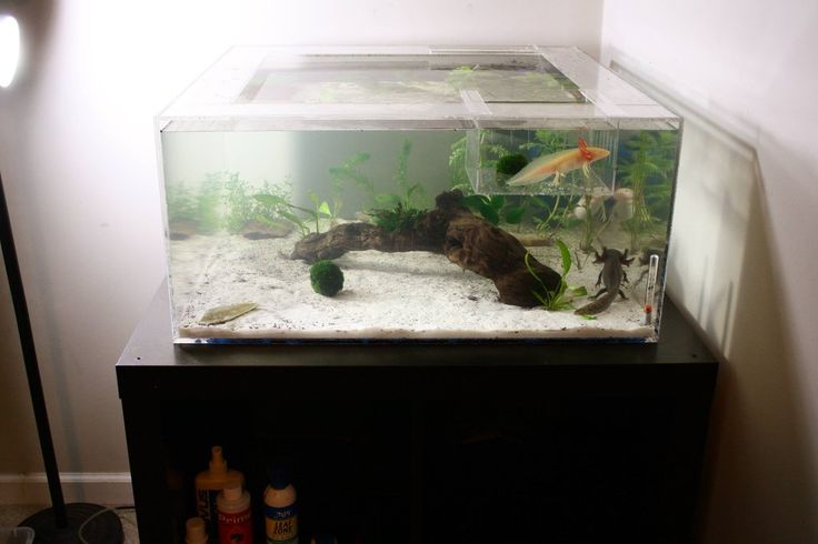 25 best ideas about axolotl tank on pinterest fish tank for Harry potter fish tank