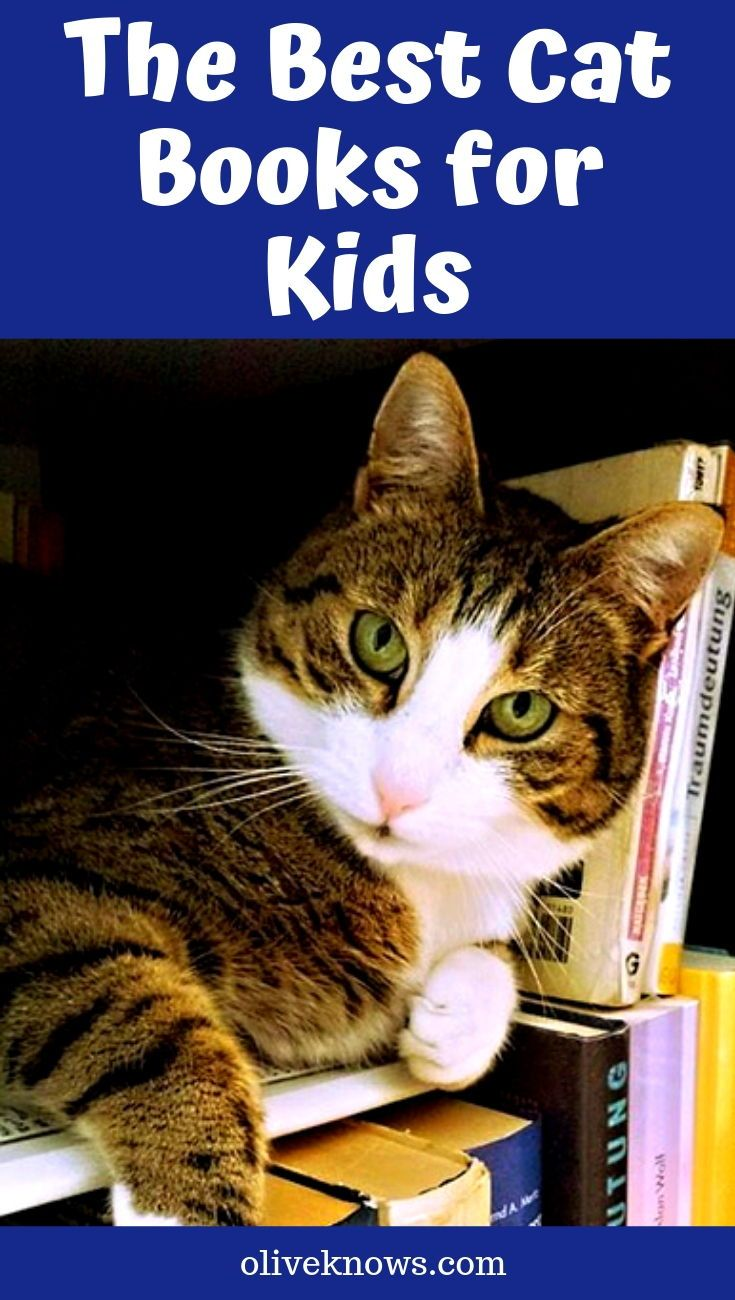 The Best Cat Books For Kids Oliveknows In 2020 Cat Books Cool Cats Cat Safety
