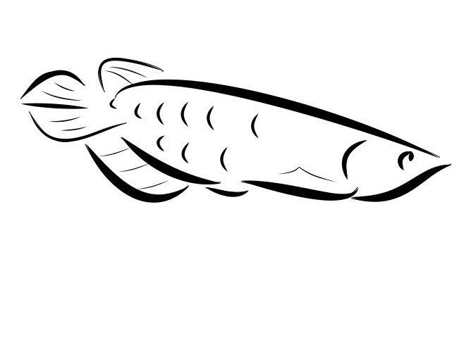 Arowana Fish Sticker Tank Aquarium Accessories Decal X 3  | eBay