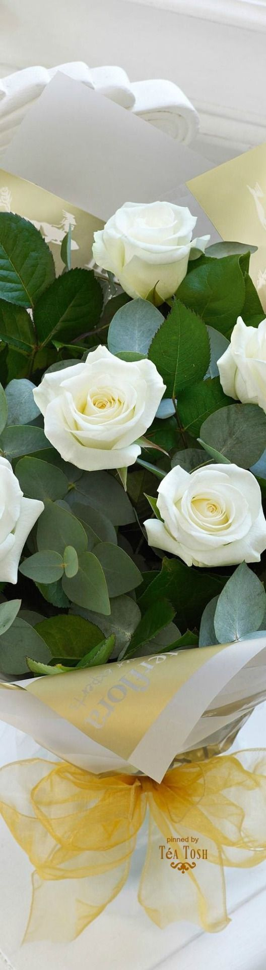 THE MAGNOLIA PLANTATION   --❇Téa Tosh❇ White Roses