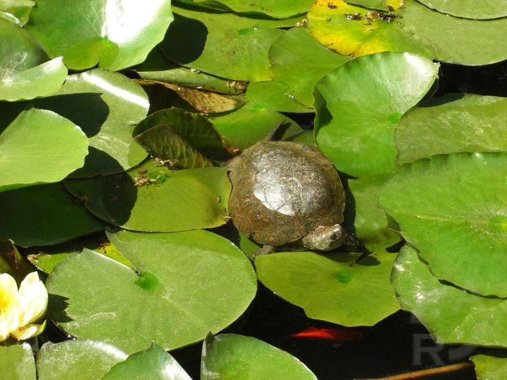 Puedes ver más fotografías en mi álbum de Flickr: http://www.flickr.com/photos/rubikt/sets/72157627577782506/