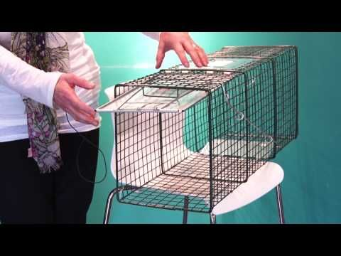 How to set a Feral Cat Trap - YouTube