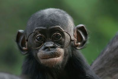 He looks smart.: Cutest Baby, Baby Monkey, Straight Hair, Funny Humor, Funny Stuff, Baby Animal, Funny Faces, Cute Monkey, Baby Bonobo