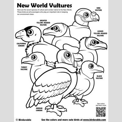 Cute Bird Coloring Pages by Birdorable - Free Downloads ...