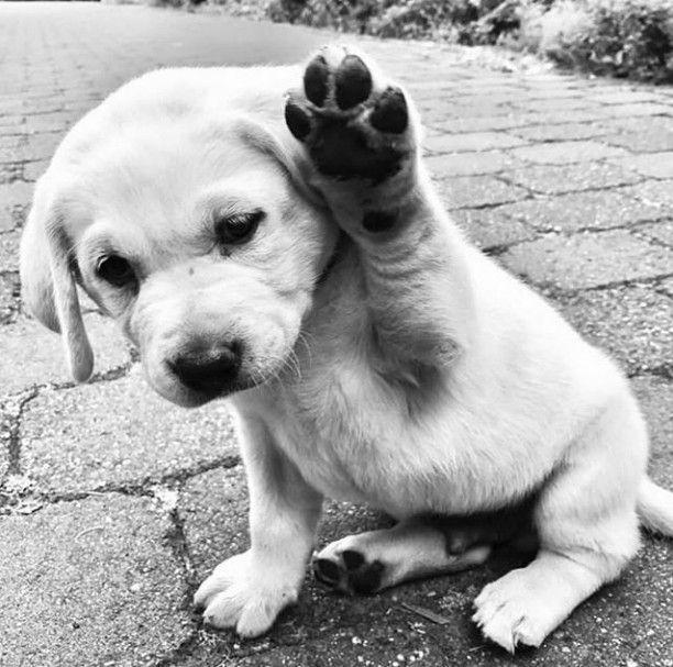 Pin Von Natalie Koch Auf Animals Hunde Tiere Haustiere