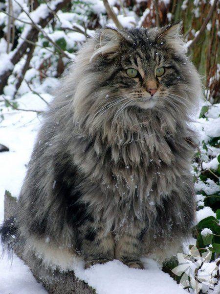 Dev kediler tam sarılmalık!