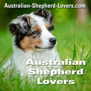 Miniature Australian Shepherd Breeders Connecticut