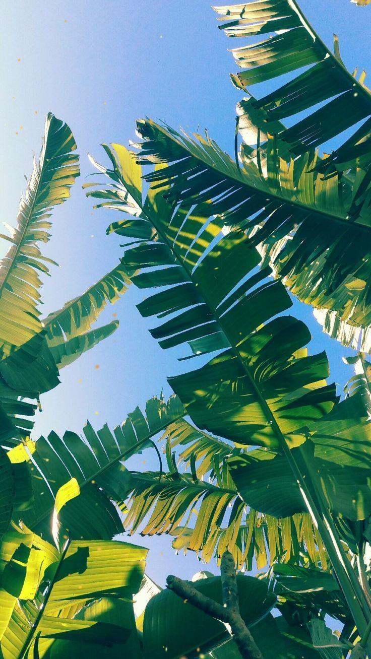 Palm Leaves Summer Tropical Palm Leaf Wallpaper Leaf Wallpaper Plant Wallpaper