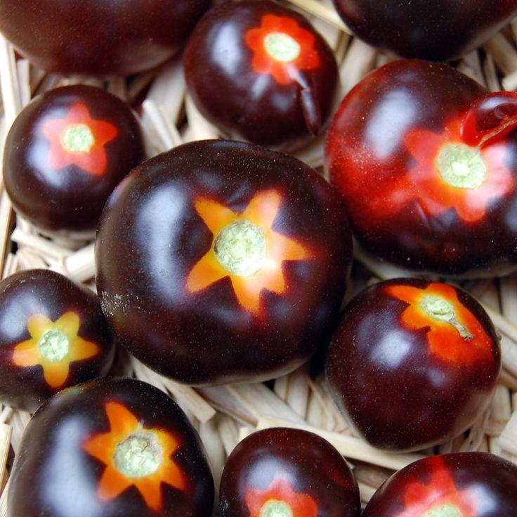 Blue Tomato Clackamas Blueberry ブルートマト・クラカマス・ブルーベリー