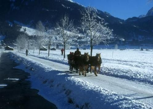 Go For a Horse and Sleigh Ride in Alberta
