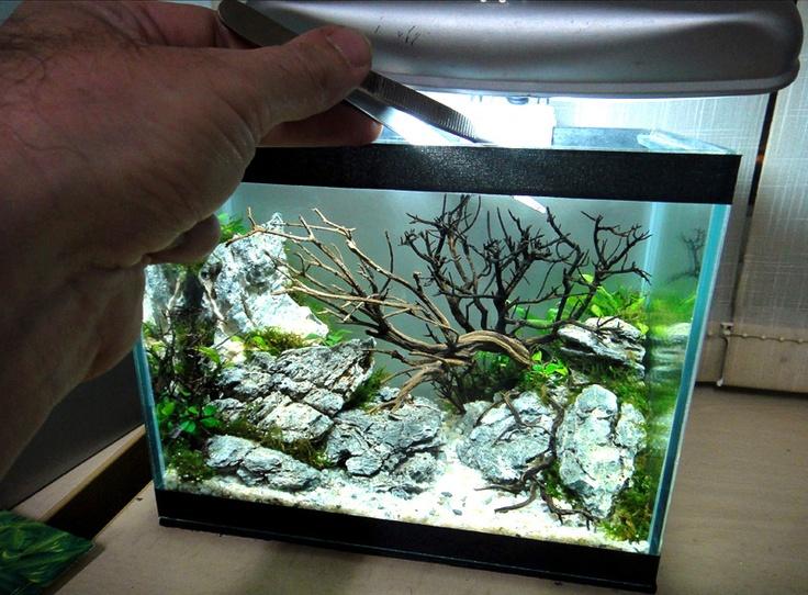Results of the minitank contest nano aquariums aquatic for Plante nano aquarium