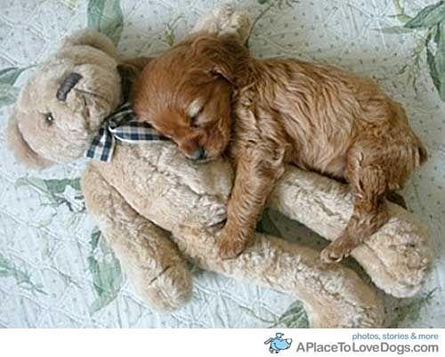 snuggle pup!