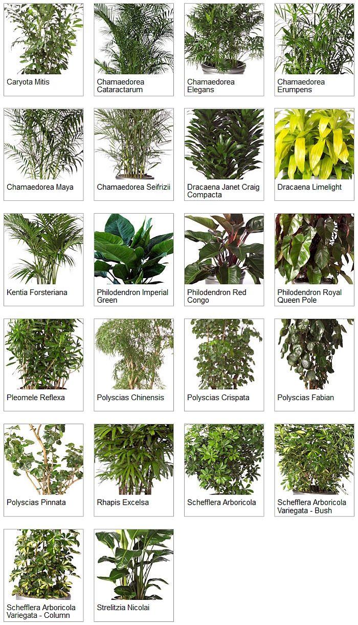 Indoor Tropical Plants Medium Light