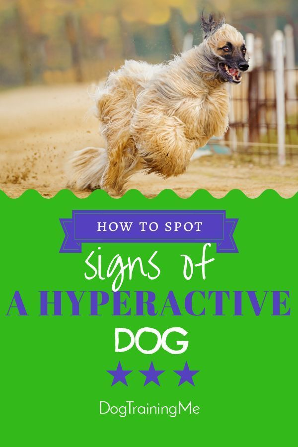 Hyperactive Dog Symptoms Dog Training Attention Seeking