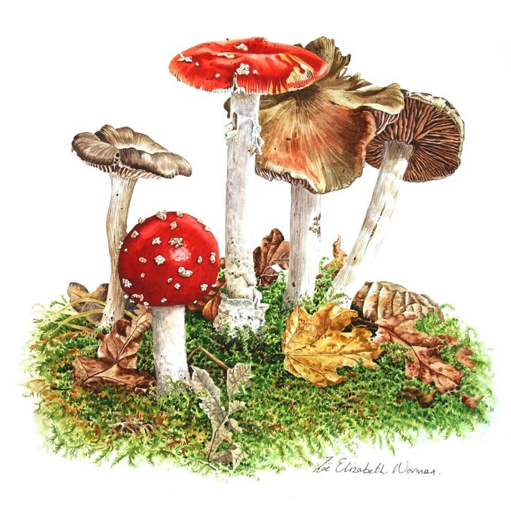 FineArtSeen.com - View Woodland Mushrooms by Zoe Elizabeth Norman. A beautiful choice for a children's bedroom or nursery decor. Discover more Watercolour Paintings for sale. FREE Delivery and 14 Day Returns.