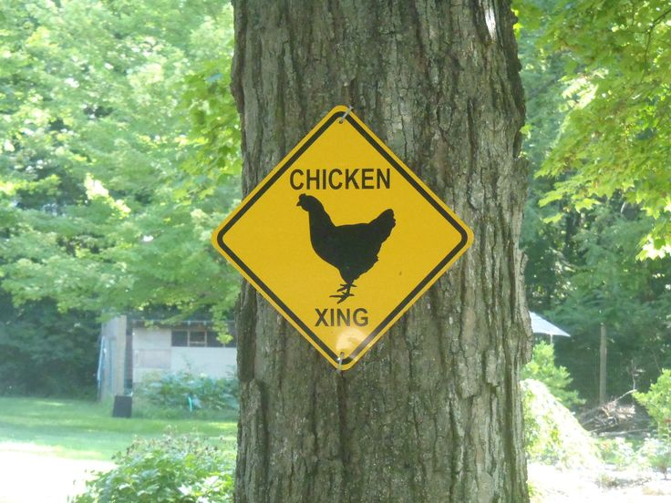 How did the chicken cross the road?  It had a sign to warn drivers!
