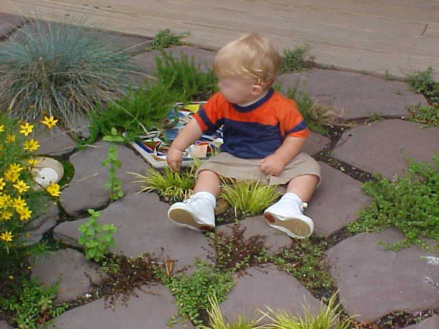 Sensory Gardens | Natural Learning Initiative