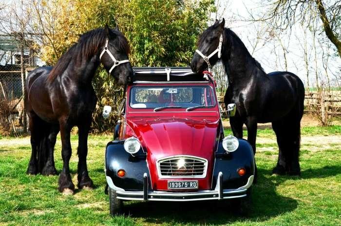 2CV et ses amis (met 2 Friese paarden)
