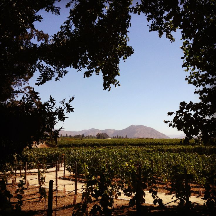winery, vineyard. Chile