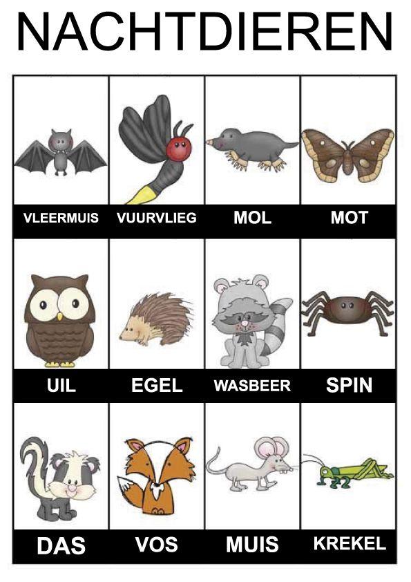 Woordkaartjes nachtdieren