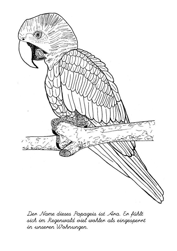 die 25+ besten ideen zu ausmalbilder vögel auf pinterest