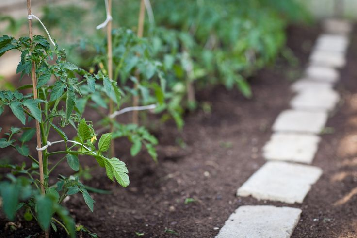When you first start considering turning a site into a permaculture garden, you need to do a thorough analysis of the plot. You need to get to know the land, the organisms that live on it and the influences that act upon it. By understanding the land, you can work with it to make the …