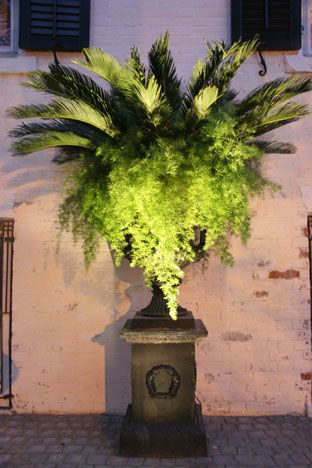 Looking to add to my pot of asparagus fern... maybe this combination of palms + asparagus fern. Nice.