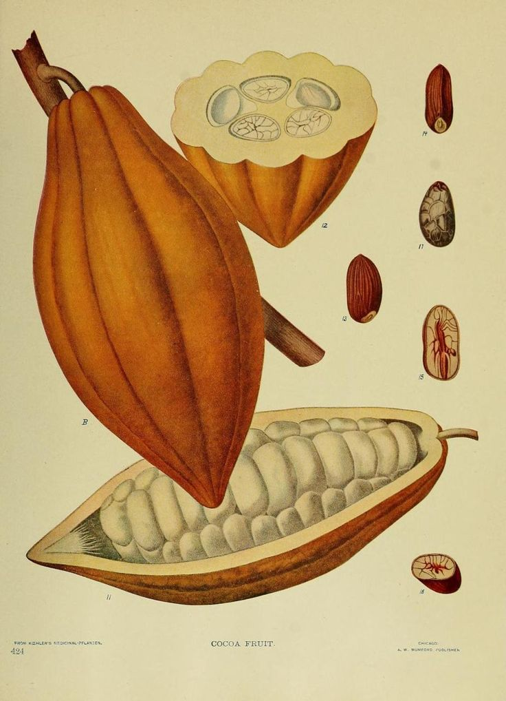 Cocoa Fruit: Prospectus of the Tropical Development Company, 1904