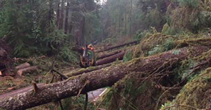 Experts baffled after a mysterious event causes hundreds of towering evergreen trees to snap like twigs.More than 100 trees fell in an area on the north side of Lake Quinault on the Olympic Peninsula https://www.disclose.tv/mysterious-phenomena-knocks-hundreds-of-huge-trees-down-snapping-them-like-twigs-322917