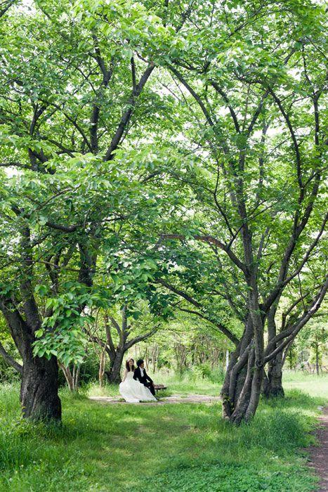 森林でフォトウェディング。大阪で洋装ロケーション。
