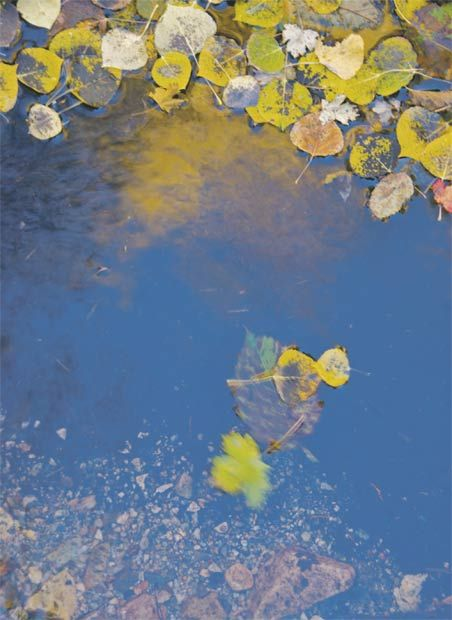 'Yerba Creek' photograph by Rick Haltermann of El Prado